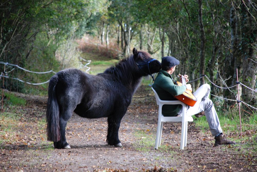 vincent-pony