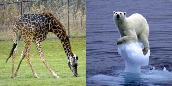 bear-giraffe