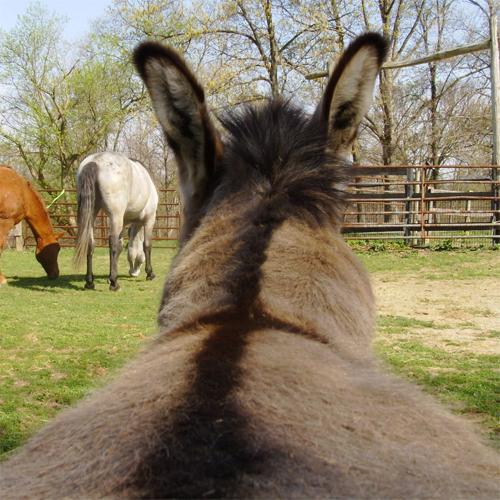 fat-donkey